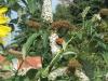 kibo-vlindertuin-aug-13-010