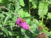 kibo-vlindertuin-aug-13-013